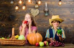 Cultivar ensina a crianças de aonde seu alimento vem Os vegetais do menino da menina dos fazendeiros das crianças colhem a explor foto de stock royalty free