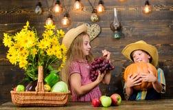 Cultivar ensina a crian?as de aonde seu alimento vem Irm?os que t?m o divertimento Explora??o agr?cola da fam?lia Mercado da expl imagem de stock