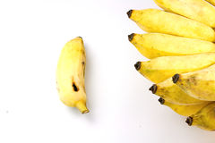 Cultivate banana on white background Royalty Free Stock Photos