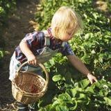 Cultivate Garden Nature Seasonal Growth Concept Royalty Free Stock Photos