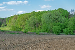 Cultivated agricultural land. At the edge of the forest during the spring plowing Royalty Free Stock Image