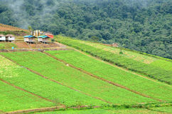 Cultivated area. Royalty Free Stock Image