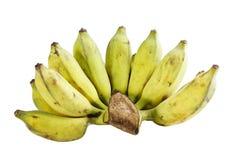 Cultivated banana Stock Photo