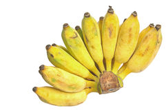 Cultivated banana Royalty Free Stock Images