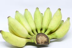 Cultivated banana. Cultivated banana - Bananas are highly nutritious and can be cooked in many ways stock photography