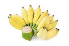 Cultivated banana. Isolated on white stock photo