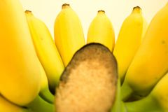 A Cultivated Banana. Cultivated banana, one of the fruits in Thailand. Can be processed in many ways stock images