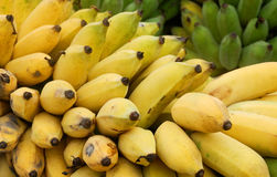 Cultivated banana. Ripe Yellow Cultivated banana in Thailand stock images