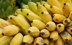 Cultivated banana. Ripe Yellow Cultivated banana in Thailand royalty free stock photos