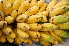 Cultivated banana. Ripe Yellow Cultivated banana in Thailand stock photo