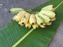 Cultivated Banana, Thai Banana and green banana leaf Royalty Free Stock Images