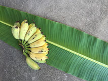 Cultivated Banana, Thai Banana and green banana leaf Stock Photos