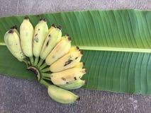 Cultivated Banana, Thai Banana and green banana leaf Stock Images