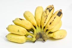 Cultivated banana Royalty Free Stock Photo