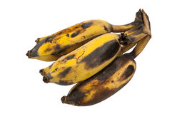 Cultivated banana Royalty Free Stock Image