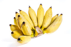 Cultivated banana  Stock Image