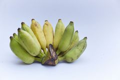 Cultivated banana on white background. Cultivated banana set on white background stock images