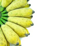 Cultivated banana on white background. Cultivated banana on a white background royalty free stock photography