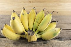 Cultivated banana on a wood.  royalty free stock photos
