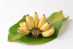 Cultivated Bananas on green banana leaves. Royalty Free Stock Photo