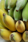 Cultivated bananas or Thai bananas Stock Image