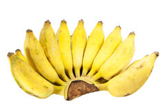 Cultivated bananas Royalty Free Stock Photography