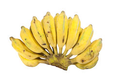 Cultivated bananas Stock Image