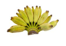 Cultivated bananas on white. Cultivated bananas on white background with clipping path royalty free stock photography