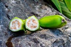 Cultivated bananascultivated des bananes au dao de chiang de luang de doi Images libres de droits