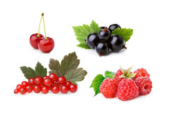 Cultivated berries isolated set Royalty Free Stock Photography