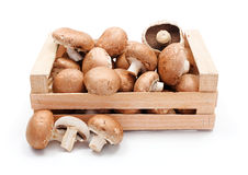 Cultivated brown champignons in wooden crate Stock Image
