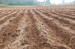Cultivated brown dried field Royalty Free Stock Photos