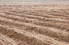 Cultivated brown dried field Royalty Free Stock Photo