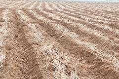 Cultivated brown dried field Stock Images