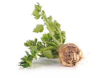 Cultivated celery Stock Photos