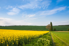 Cultivated farm fields Stock Images