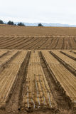 Cultivated Farm Land Stock Photography