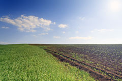 Cultivated farmers field Royalty Free Stock Photos
