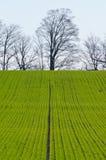 Cultivated farmers field Stock Photos