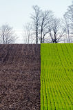 Cultivated farmers field Royalty Free Stock Image