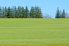 Cultivated farmers field Royalty Free Stock Images
