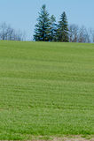 Cultivated farmers field Stock Image