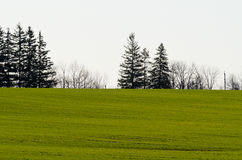 Cultivated farmers field Royalty Free Stock Photo