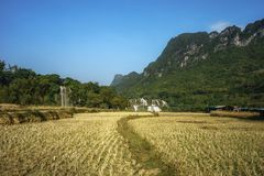 Cultivated farmland in dry season in Cao Bang province with Ban Gioc waterfall in north of Vietnam.  Royalty Free Stock Photos