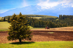 Cultivated farmland Stock Photo