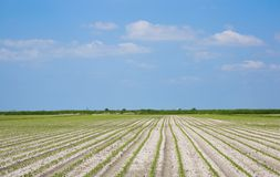 Cultivated field. And blue sky with clouds Stock Photos