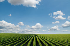 Cultivated field Royalty Free Stock Image