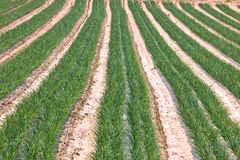 Cultivated field Royalty Free Stock Photos