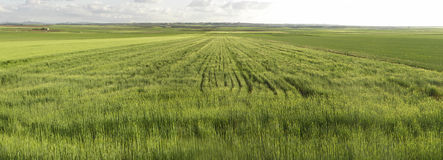 Cultivated field Stock Photos