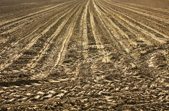 Cultivated field. With furrows sowing Royalty Free Stock Image